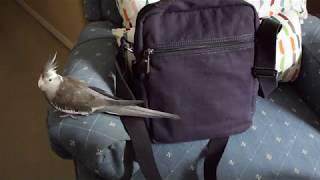 Xincada Mens Canvas Shoulder Bag