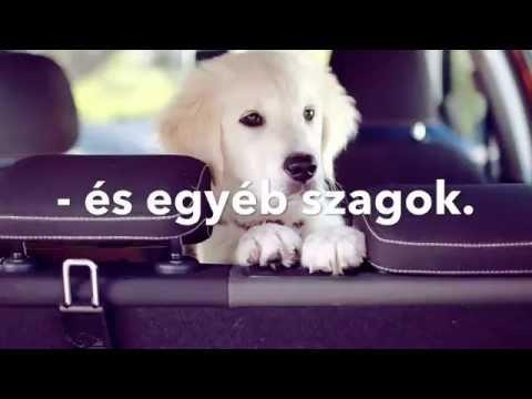 Giardia en perros que es