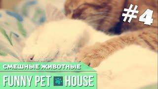 СМЕШНЫЕ ЖИВОТНЫЕ И ПИТОМЦЫ #5 СЕНТЯБРЬ 2018 [Funny Pet House] Смешные животные