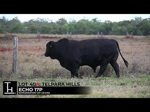 TELPARA HILLS ECHO 17P