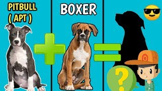10 Incredible Mixed Cross Hybrid Of Boxer | 2019 | Finest Dog Cross Breeds