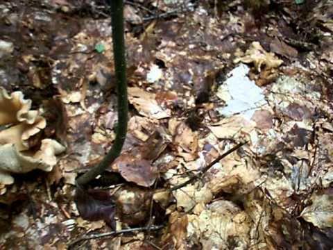 Trattamento di un fungo di piede di SPb