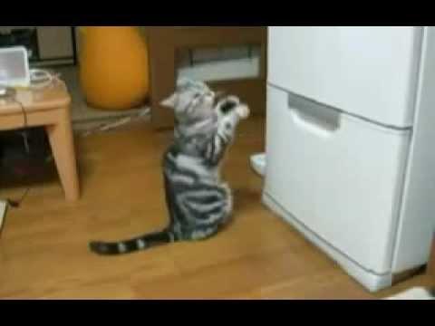Молитва Кота