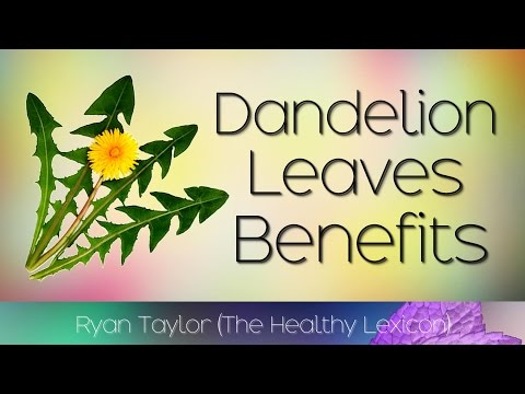 Video Dandelion Leaves: Benefits and Uses