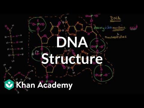 Struktura Molekularna Dna Film Z Polskimi Napisami Film Khan