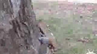 Die besten 100 Videos Rotzevolles Eichhörnchen
