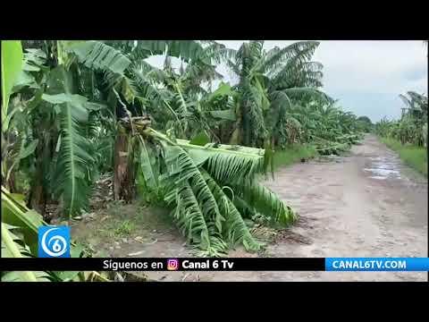 Productores de plátanos, cítricos y maíz en Veracruz piden apoyo por pérdidas totales