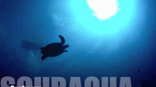 preview picture of video 'Diving with a Hawksbill Turtle on St. Eustatius'