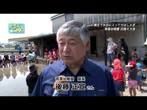 たうんニュース2015年6月「青葉幼稚園田植え大会」