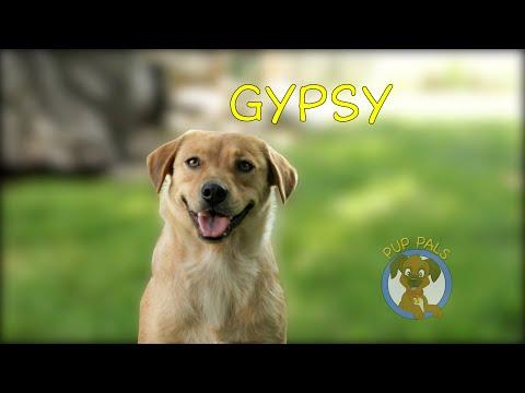 Gypsy, an adoptable Labrador Retriever Mix in Holmdel, NJ_image-1