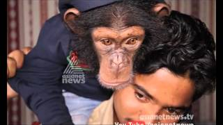 Cute and funny baby chimpanzee from Ras al-Khaimah zoo | Gulf Round Up 18 Feb 2016