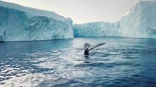 Silversea Cruises: Live the Authentic Beauty of Antarctica