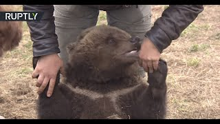 Meanwhile in Russia: Mansur the bear lives at an airfield
