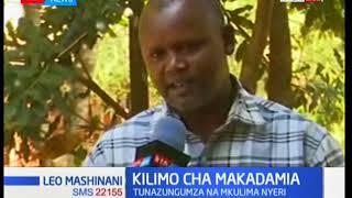 Mkulima Peter Irungu aelezea umuhimu wa makadamia kutoka maeneo ya Gichinga-Nyeri