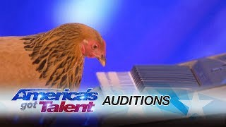 Jokgu of the Flockstars: Chicken Plays Patriotic Tune on Keyboard - America's Got Talent 2017