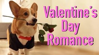VALENTINE'S DAY WITH Topi the Corgi