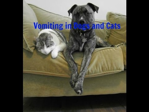 Vomiting In Dogs And Cats: Natural Answers