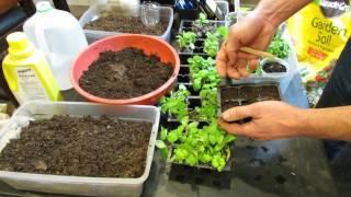Seed Starting Basil Indoors: Starting Mixes, Light, Fertilizing & More  - Grow as I Grow Series