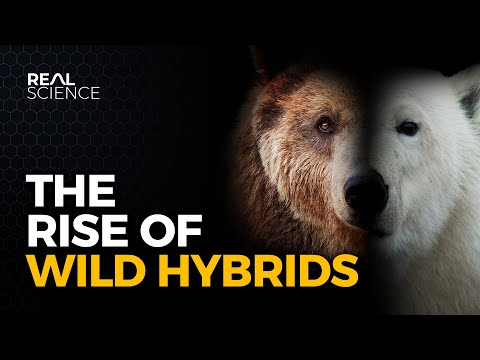Hybrid Animals Are Becoming More Common. But Why?