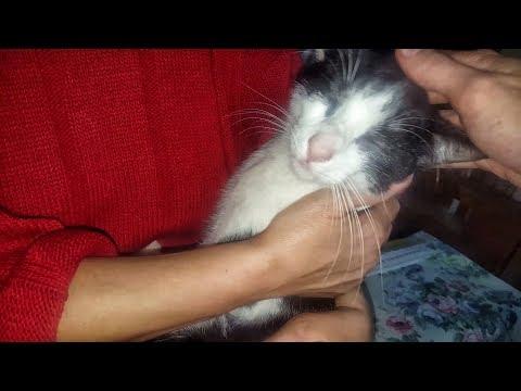 Che fare con vermi a un gatto