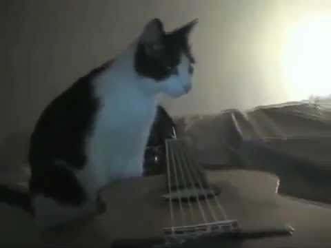 This Cat Played It Cool In Melbourne Earthquake