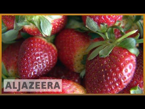 🇦🇺 Australia cracks down after needles found in strawberries   Al Jazeera English