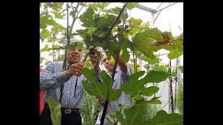 PM singgah kebun anggur tempatan