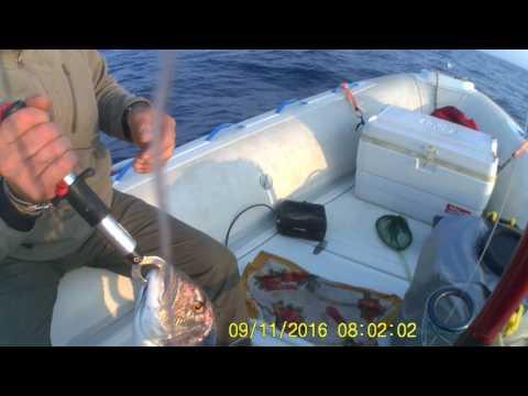 La pesca su una carpa su video donka