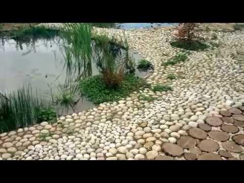Helminth tojások a székletben tünetek kezelése