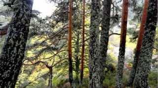 Video del alojamiento La Cantina Del Tobero