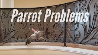 Vinny Gets Stuck On the Railing and Jersey Watches | PARROT VIDEO OF THE DAY