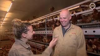 Deze Doetinchemse boer wil zijn kippen niet in legbatterijen stoppen - De Boer is Troef