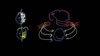 Bell's Palsy vs Upper Motor Neuron Lesion