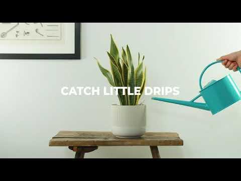 Meet Hedge – Smart Leak Sensor Kit