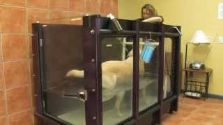 preview picture of video 'Newburgh Veterinary Hospital - Short   Newburgh, NY'