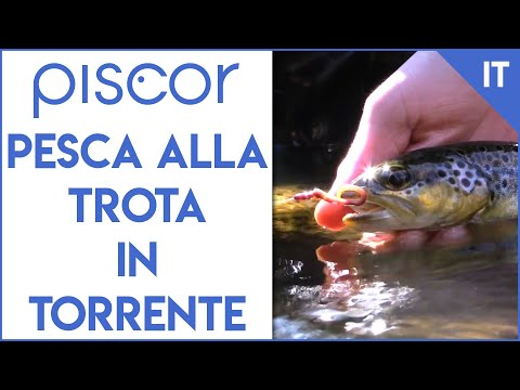 Russo che pesca in 3 Sar grayling