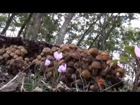 Farmaci per un fungo di mani