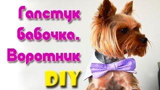 Одежда для собак Воротник и галстук бабочка