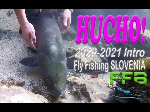 Hucho-Hucho Euro Taimen fishing open! Intro