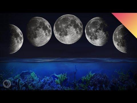 The Romantic Lure of Moonlight