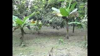 preview picture of video 'Se Vende Finca 105 tareas en Juma-Bonao'