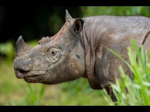 Borneo Wildlife Highlights