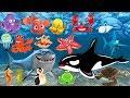 Pelajari nama dan suara hewan laut Animasi gambar binatang untuk anakanak lumbalumba hiu paus