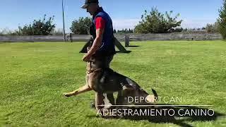 Adiestramiento Canino Deportcan