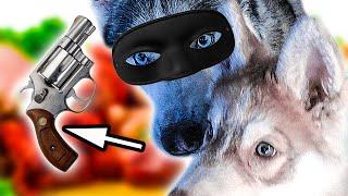 DOGVLOG: ХАСКИ ГРАБЯТ МАГАЗИН! 😂 Хаски Бандит. Говорящая собака