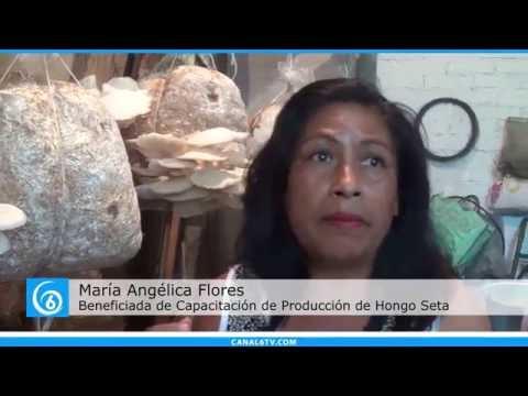 Reconocimiento por elaboración de hongo seta en San Francisco Acuautla