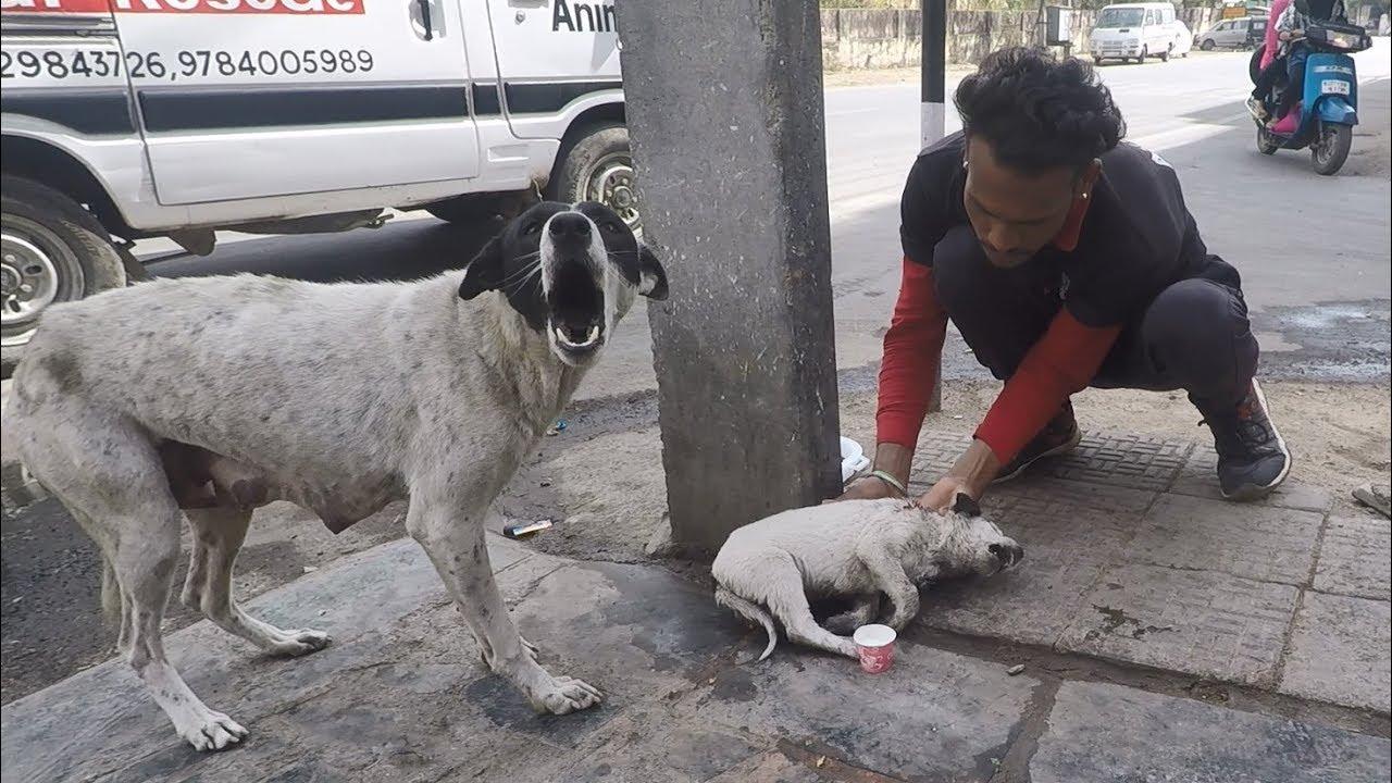 Собака-мать умоляла помочь ее ребенку