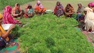 100% Vegetarian Healthy Food Recipe - Coriander Leaves Special Mashed Prepared By Village Women