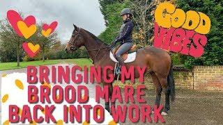 BRINGING MY BROOD MARE BACK INTO WORK | HORSE MAKE OVER | HACKETT EQUINE VLOG