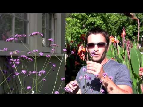 Gyógynövények parazitákból és mycosisból
